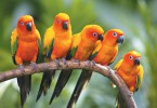 Parrot-orange-in-group-hd-wallpapers.jpg