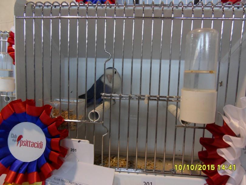 SDC12713